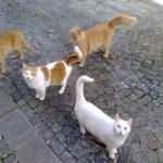 Currie ed i suoi amici
