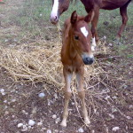 Cheyenne da piccola