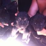 Cuccioli di Chanel